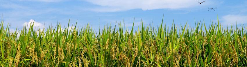 NPO法人国内産米の粉伝統食文化推進ネットワーク
